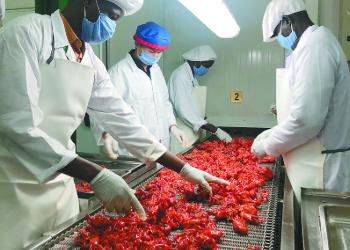 《中国小龙虾产业发展报告(2018)》:中国80%的进口小龙虾来自埃及