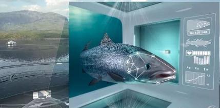面部识别程序应用于三文鱼,无人化的水产养殖已开启