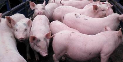 生猪价格上涨温氏股份等上市企业销售收入猛增,区域性生猪价格差异明显