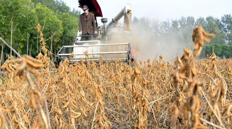 实施大豆振兴计划,国产大豆迎来加速发展的战略机遇期