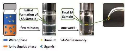 新型铀萃取分离方法实现水溶液中铀酰离子的一步法提取和固化