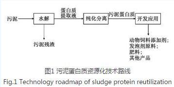 城市污泥处理中蛋白质资源化研究方向建议与展望