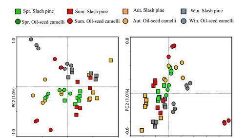 落叶松人工林林分密度提升动物传播种子有效性调控机制研究