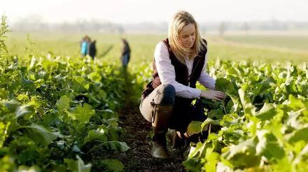 美国科学家眼中农业领域亟待突破的五大研究方向