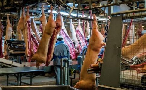 丹麦屠宰行业特点、法规标准现状及对我国屠宰行业管理工作的启示