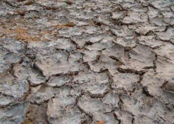 """""""首届中国西南污染场地风险管控与绿色修复技术论坛""""即将在成都举行"""