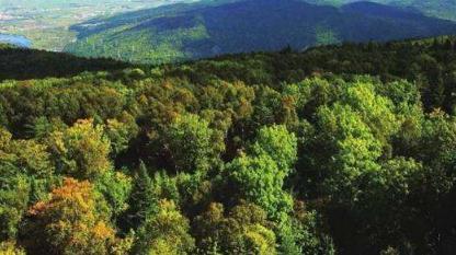 林业种植在环境改善中的作用及策略分析