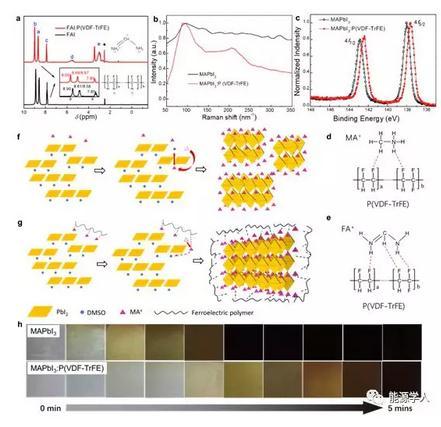 极化铁电聚合物材料提升MAPbI3光伏器件的光电转换效率