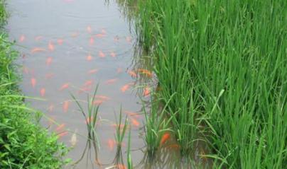 水产生态养殖与新养殖模式发展现状、难题及建议