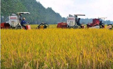 """水稻有机叶面肥""""真打粮"""":创新配方专注水稻肥效"""