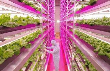 LED植物工厂:让农业摆脱天和地,自由可控