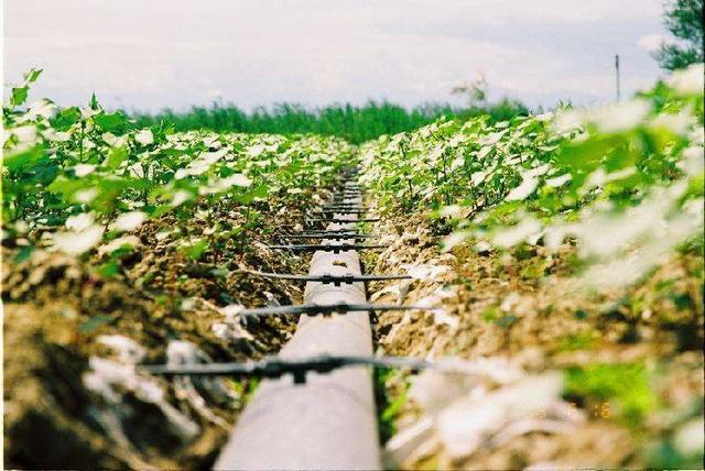 """以色列发达的农业水平与其政府、企业与科学家的""""默契""""合作分不开"""