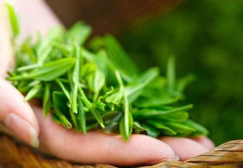 安康富硒茶产业发展现状、优势、难题及对策