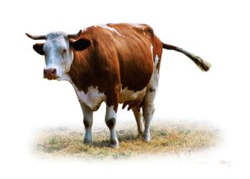我国肉牛行业未来发展的6大方向