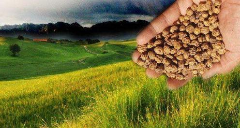 油莎豆产业链条丰富、综合利用价值高、市场前景广阔