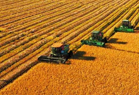 国家统计局公布2019年全国夏粮生产数据:总产量14174万吨,同比增长2.1%