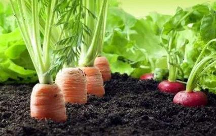 简述有机肥的作用、质量要求、生产原料和处理方法
