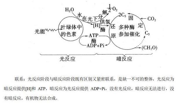 光合作用的产物有哪些?主要产物和最终产物有哪些?