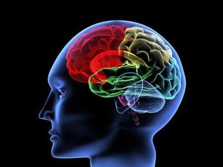 武汉大学揭示长非编码RNA调控大脑皮层投射神经元分化新机制