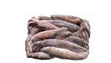 阿根廷鱿鱼怎么处理?冷冻调理鱿鱼串的加工工艺及流程