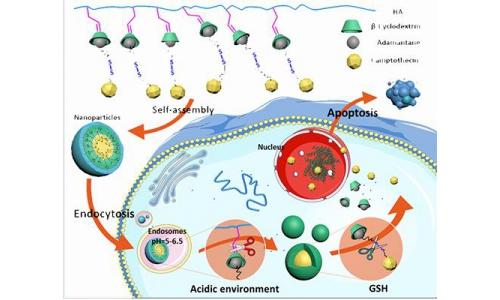纳米药在肿瘤组织中主动渗透的新机制,显著提高抗肿瘤疗效