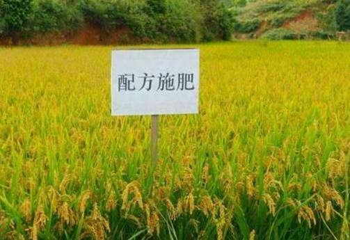 水稻测土配方施肥对肥料利用率的影响实验
