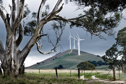 南澳大利亚的四家风电场运营商被监管机构起诉