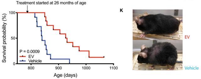 NMN可显著逆转衰老和延长寿命:第二代NAD+补充剂逐步实用化
