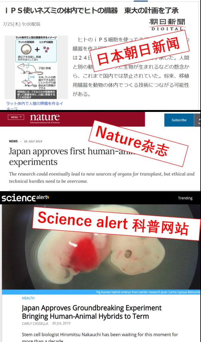 日本批准人-动物混合胚胎实验,真能培育出人类器 官吗?