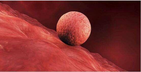 """中国科学家打开人类胚胎着床""""黑匣子"""",绘制解锁导航图"""