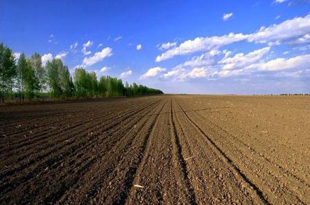 什么是土壤微塑料污染?有什么危害?