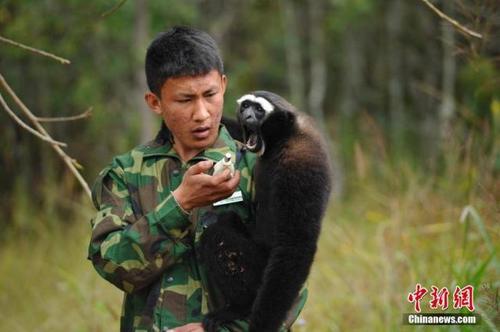 """""""无人机+热成像""""技术助力野生动物调查与保护"""