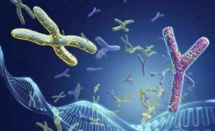 染色体变异:癌症的典型特征