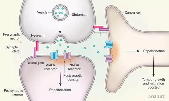 癌细胞竟然会伪装成神经细胞,促进自己生长!