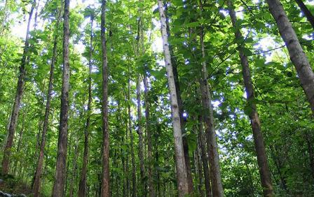 如何进行人工林高效培育与生态保护修复?