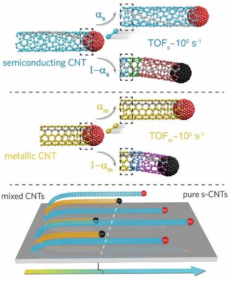 ?清华大学魏飞教授团队实现一步法制备99.9999%半导体碳纳米管阵列