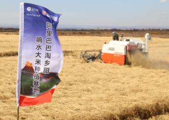 阿里巴巴与黑龙江多个大米地标品牌合作,建设标准示范基地