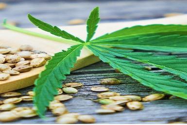 贝尔香精香料推出植物大麻香料和大麻提取物,新型止痛因子的商业化