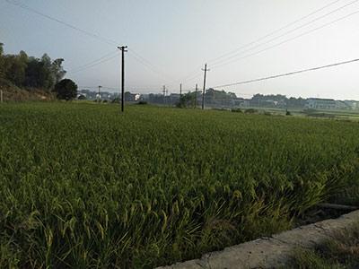 农业农村部规划设计研究院:我国农业工程领域的中坚力量