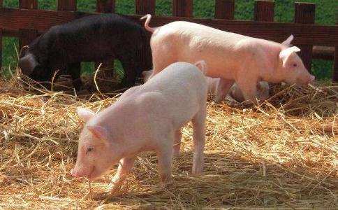 上市公司扩大生猪养殖规模,估计2020猪价有所回落