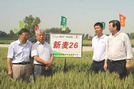 最新超强筋小麦品种公布与推荐