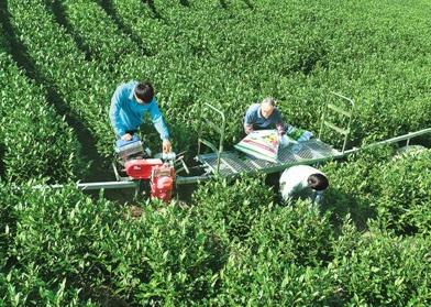 绿色技术防控病虫害,化肥替代提升耕地地力