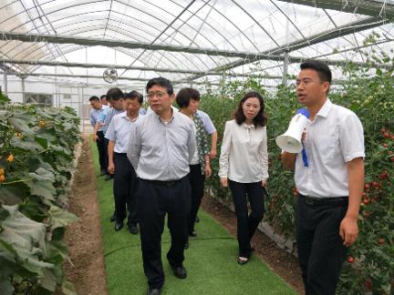 江苏农科院:种苗创新助力蔬菜大国走向强国,智能机械让蔬菜种植省时省力