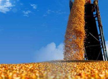 广西落实粮食安全省长责任制取得成效:水稻玉米病虫累计防治面积4500万亩次