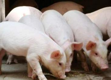 重庆新增生猪产能84万头,将安排6.65亿资金保障生猪产能迅速恢复