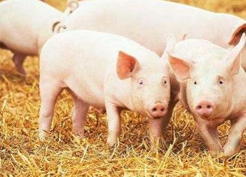 贵州各地多措并举稳定生猪生产,保障市场安全供应和价格稳定