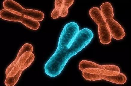 男性丢失y染色体,对身体有何影响?