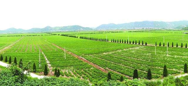 口粮绝对安全,饭碗牢牢地端在自己手里,强化农业