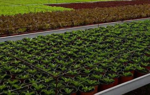林业育苗容器育苗技术及种子处理步骤
