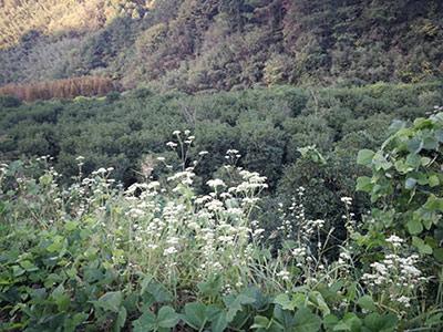 林业工程树木养护管理措施及重要性